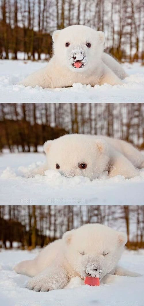 Pictures of Animals Playing with Snow (28)