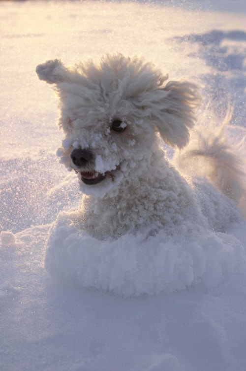 Pictures of Animals Playing with Snow (29)