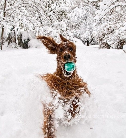Pictures of Animals Playing with Snow (30)