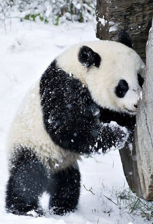 Pictures of Animals Playing with Snow (4)