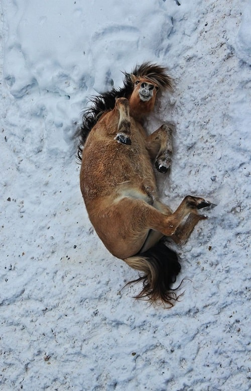 Pictures of Animals Playing with Snow (5)