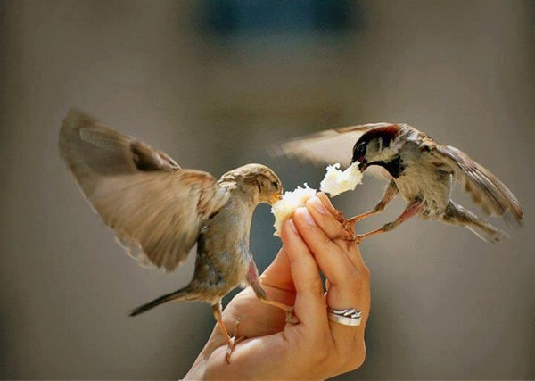 Pictures of Animals Stuffing Food into Their Mouth (2)