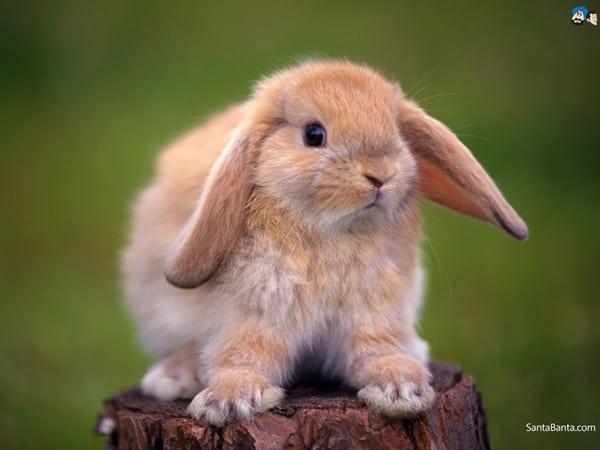 sudden-death-in-rabbits-3