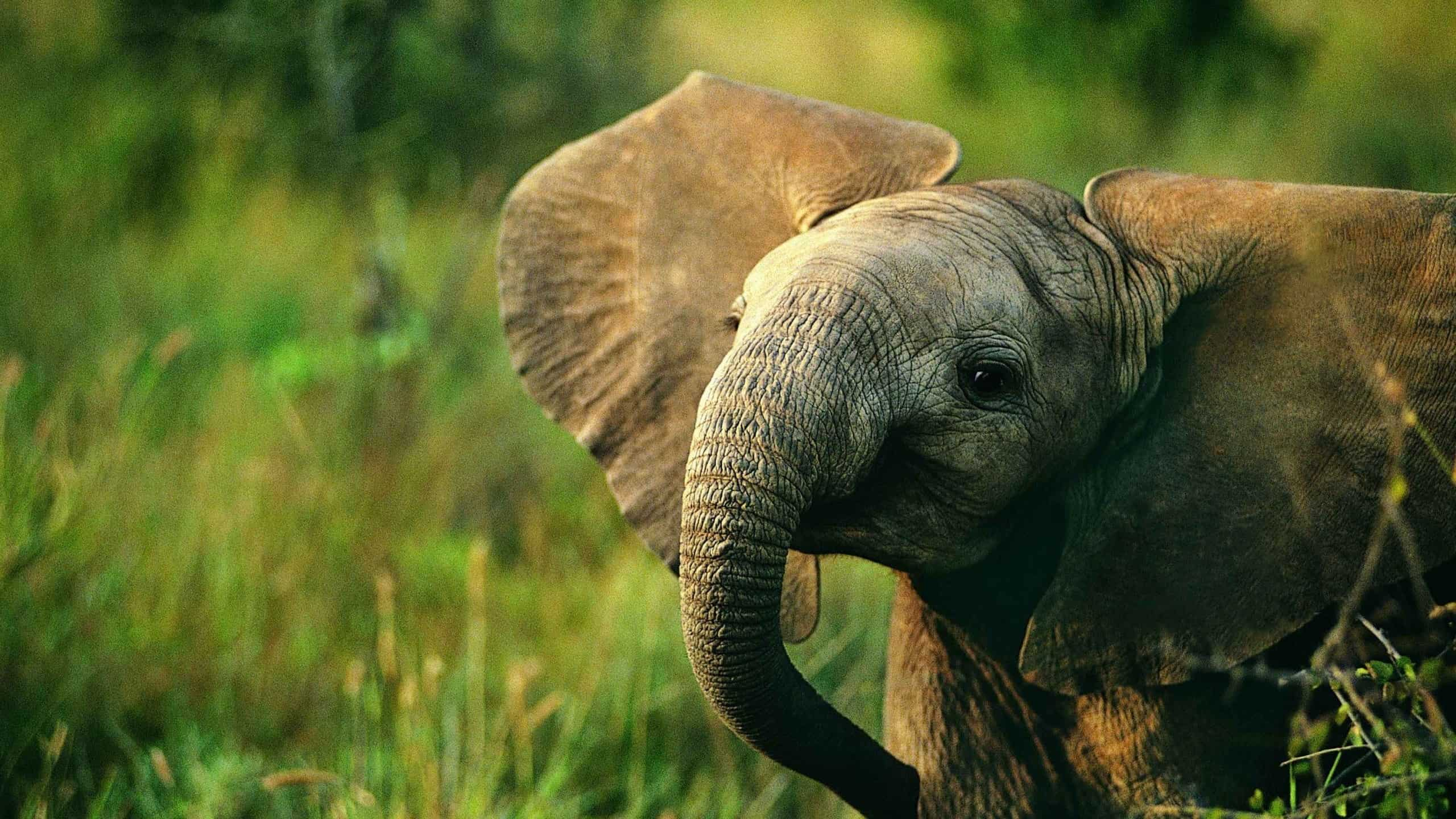 60 Beautiful And Cute Animal Wallpapers