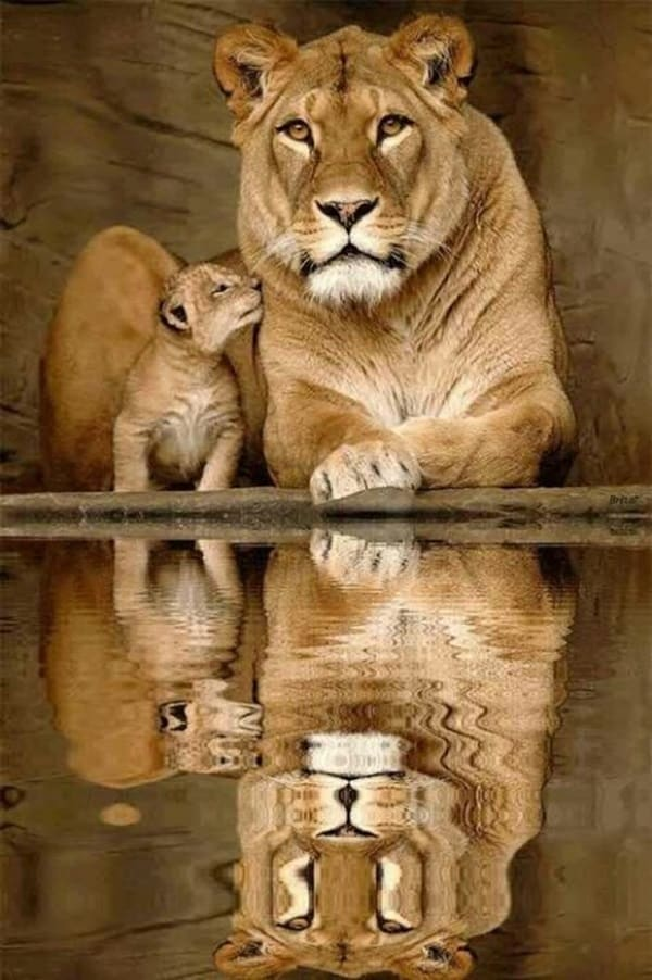 beautiful pictures of animals and their reflection (11)