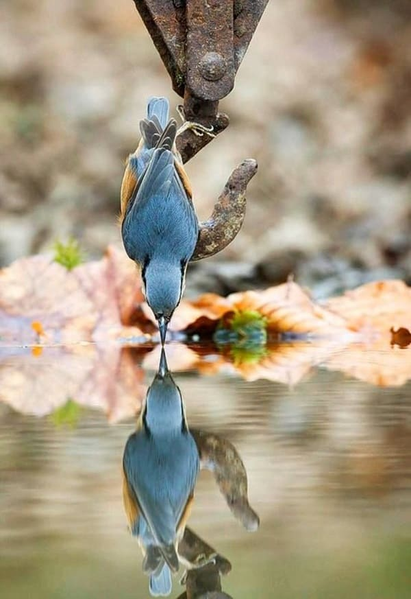 beautiful pictures of animals and their reflection (14)