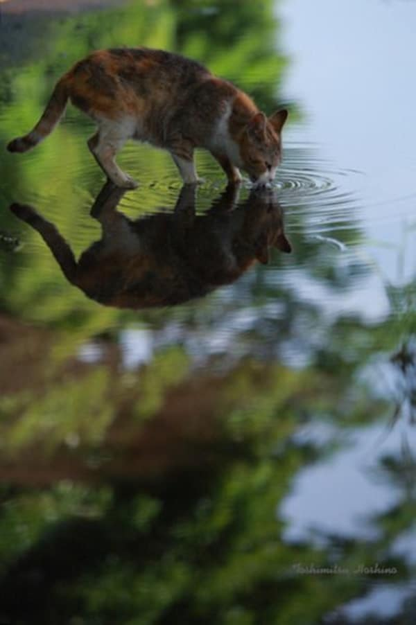beautiful pictures of animals and their reflection (18)