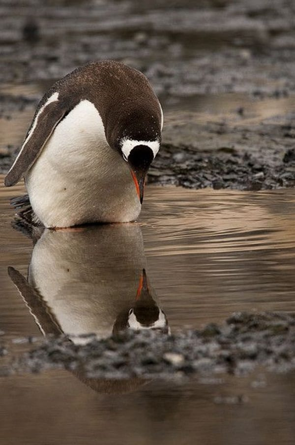 beautiful pictures of animals and their reflection (19)