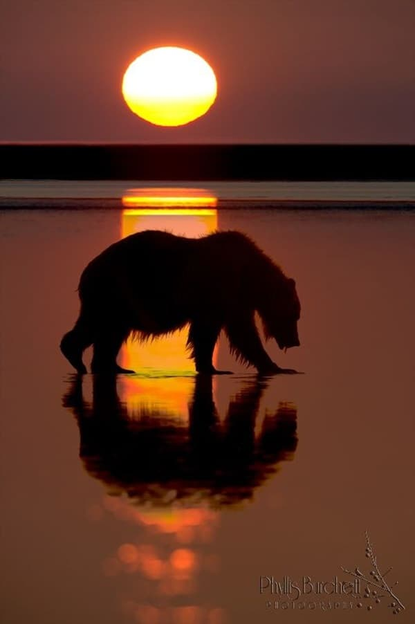 beautiful pictures of animals and their reflection (26)