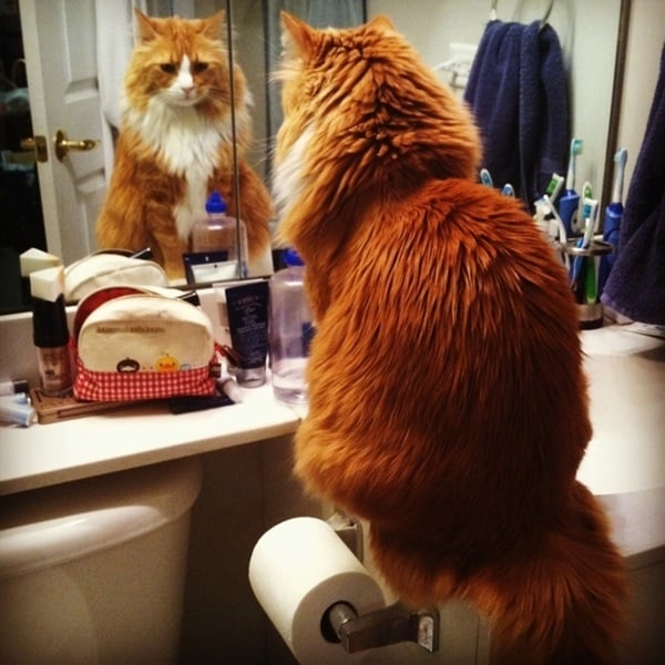 beautiful pictures of animals and their reflection (27)