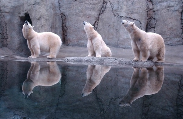beautiful pictures of animals and their reflection (29)