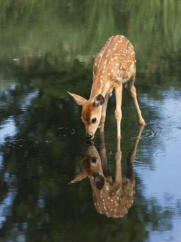 beautiful pictures of animals and their reflection (6)