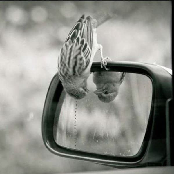 beautiful pictures of animals and their reflection (9)