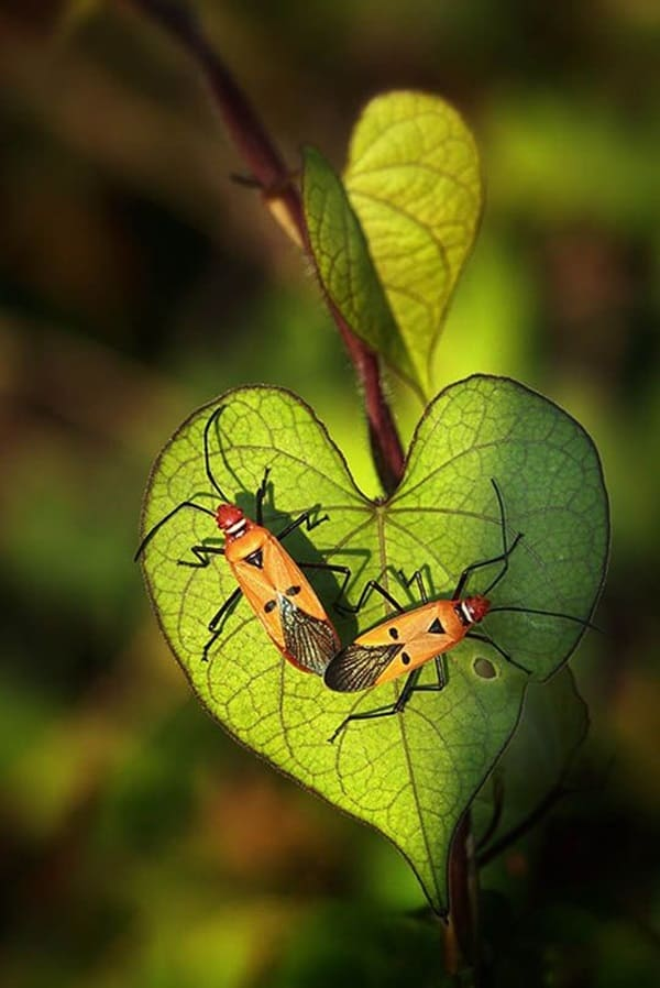 Beautiful insects Pictures (17)