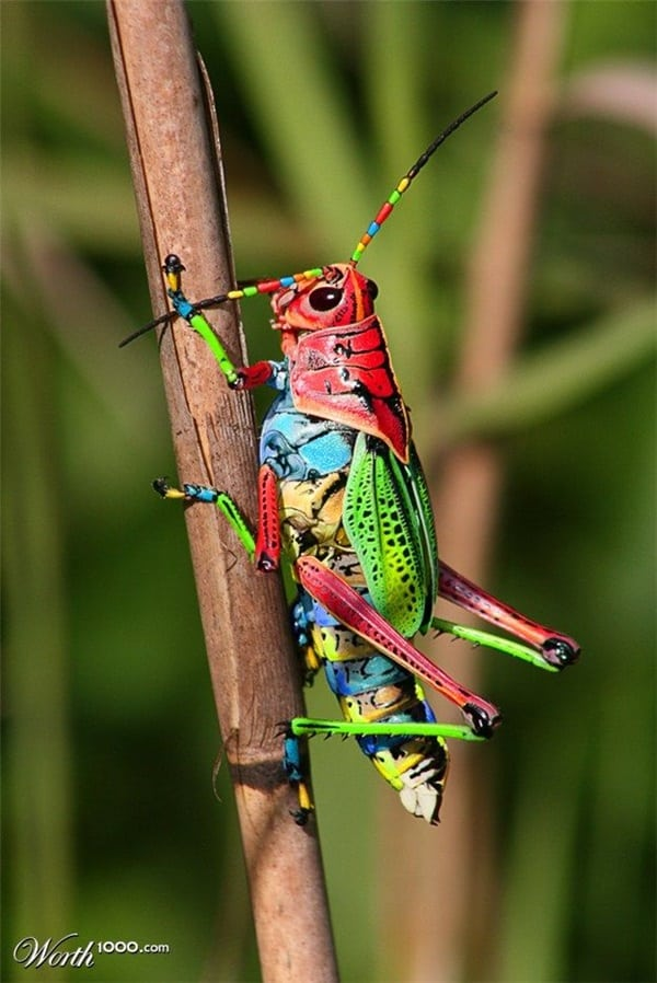 Beautiful insects Pictures (22)
