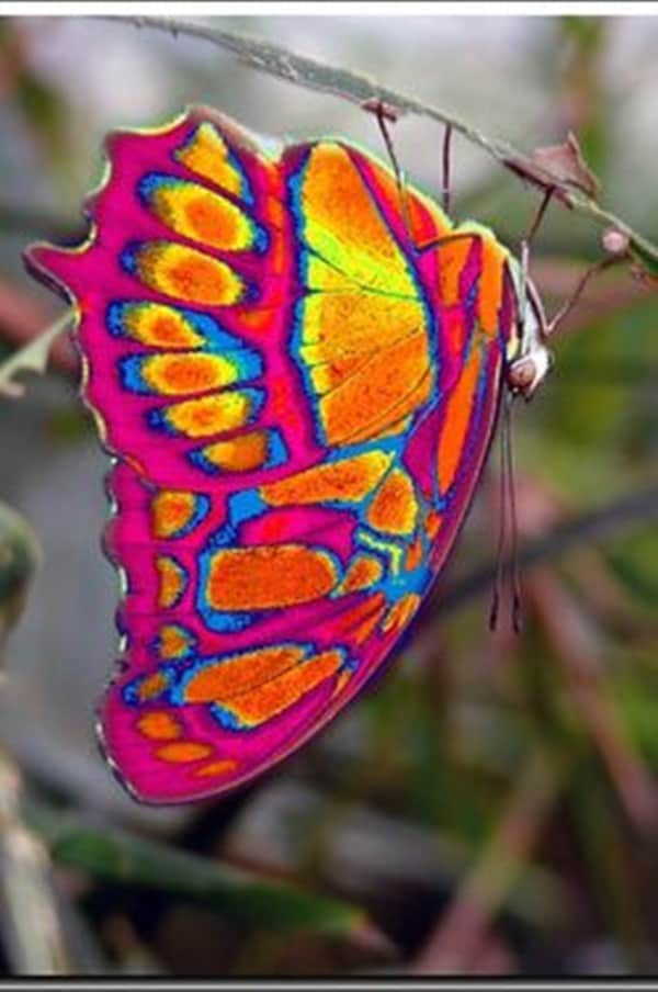 Beautiful insects Pictures (27)