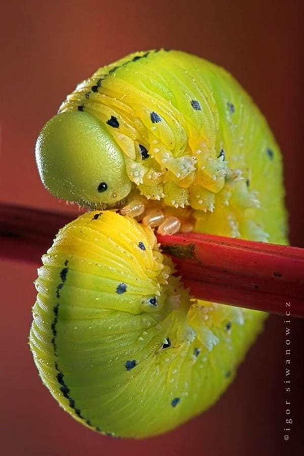 Beautiful insects Pictures (5)