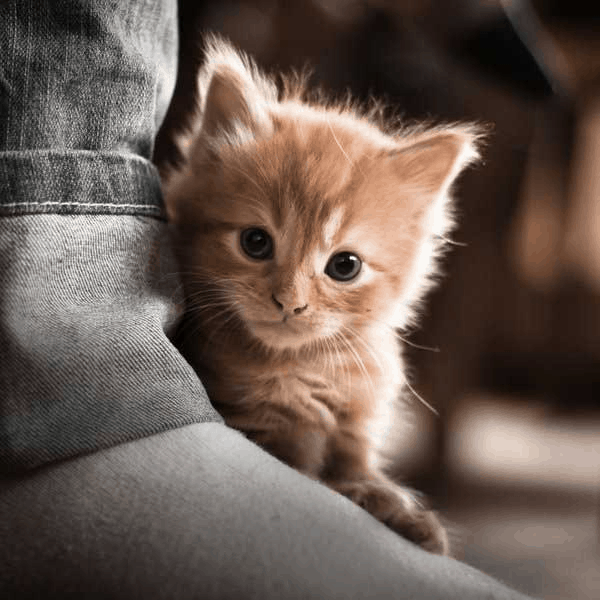 Cute Cat Pictures (1)