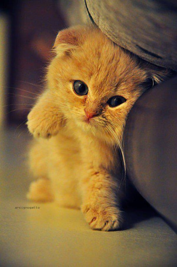 Cute Cat Pictures (20)
