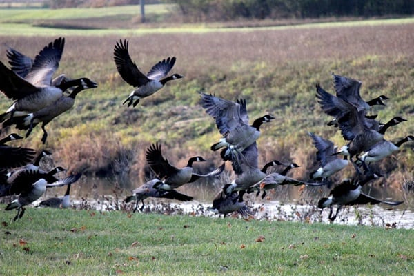 Pictures Of Birds Ready To Take Off Or Fly (19)