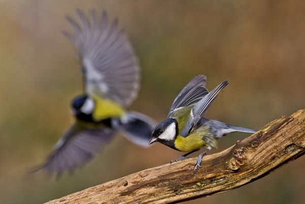 Pictures Of Birds Ready To Take Off Or Fly (25)