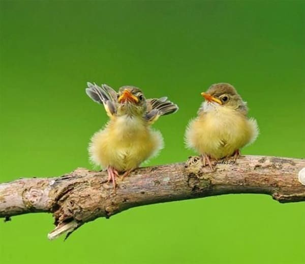 Pictures Of Birds Ready To Take Off Or Fly (9)