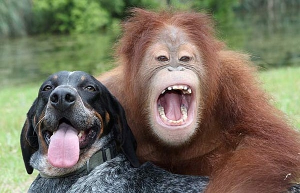 animals different emotions (30)