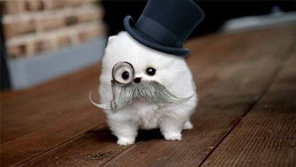 animals with mustache (14)