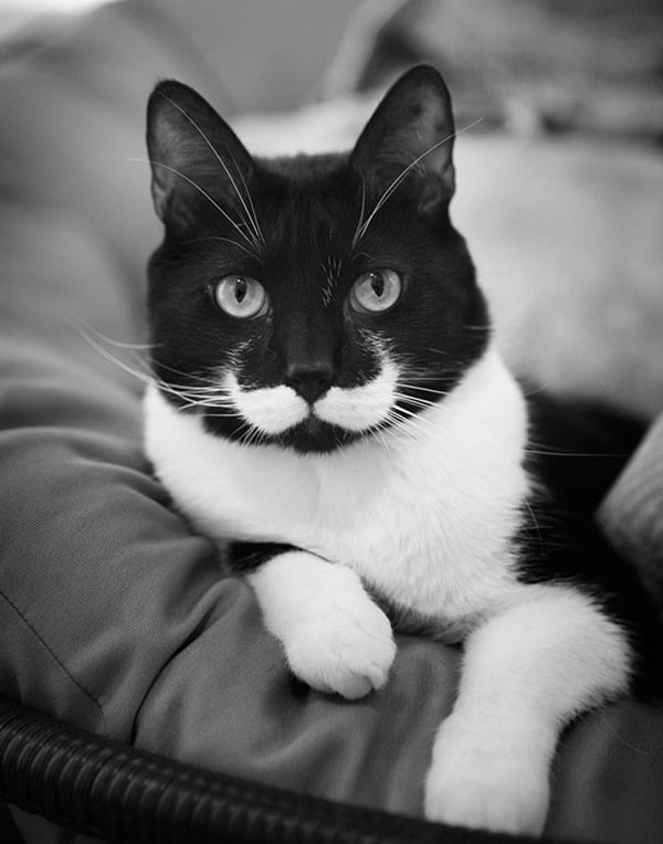 animals with mustache (16)