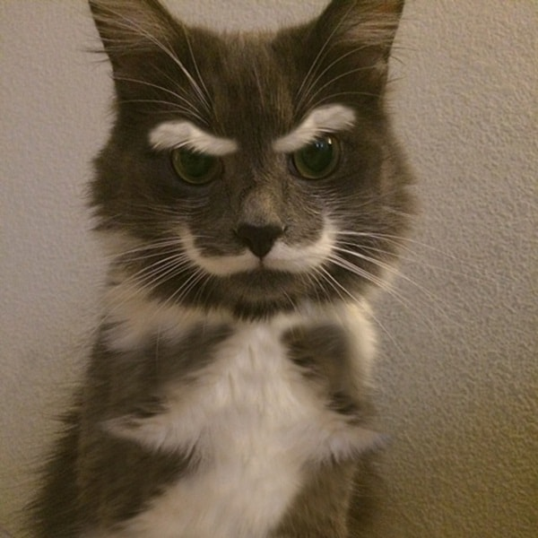 animals with mustache (19)