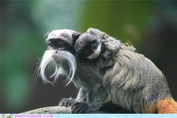 animals with mustache (2)