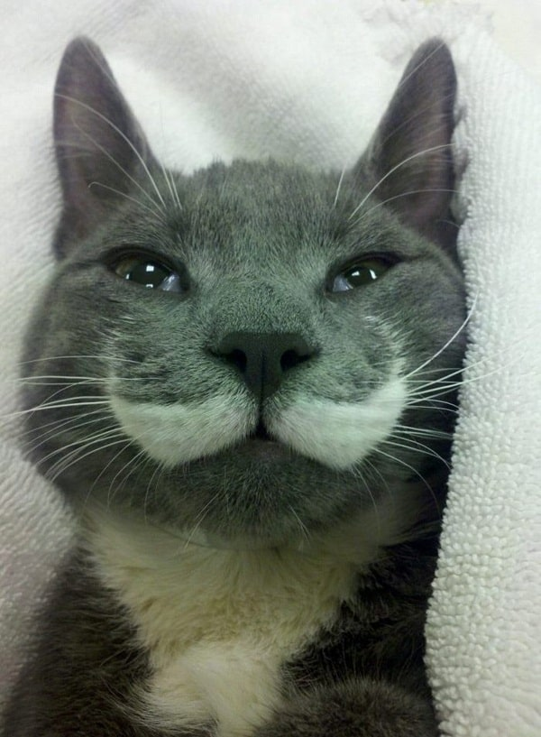 animals with mustache (24)