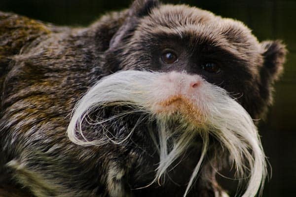 35 Funny Pictures Of Animals With Mustaches