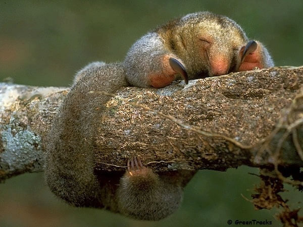 cutest tree dwelling animals11