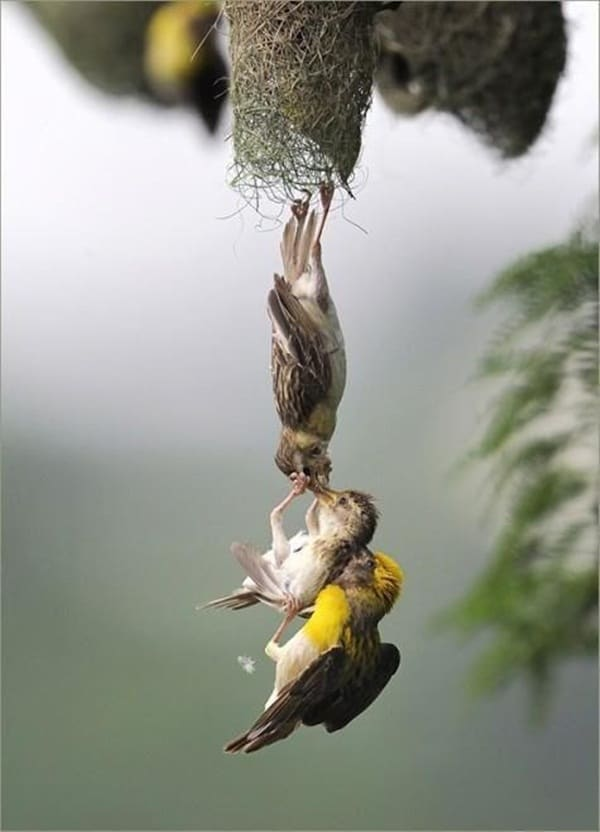 mother animals saving their child (20)