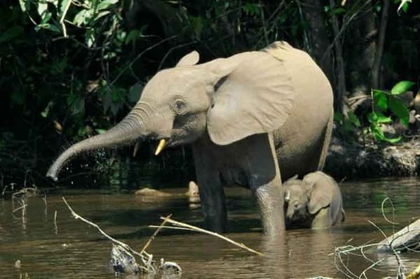 mother animals saving their child (25)