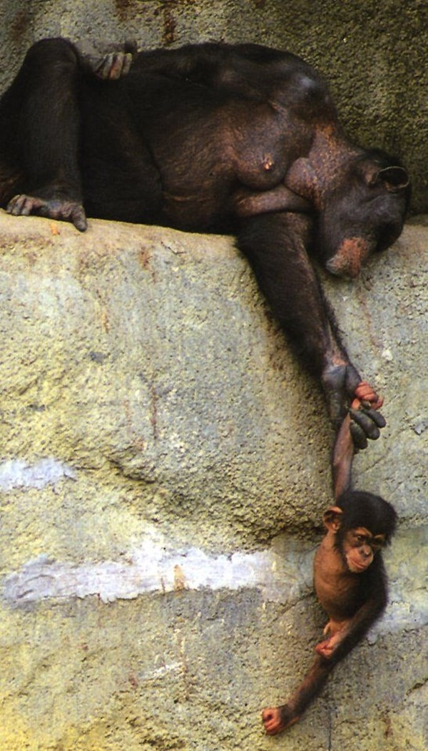 mother animals saving their child (4)