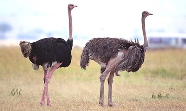 10 Amazing desert Animals10