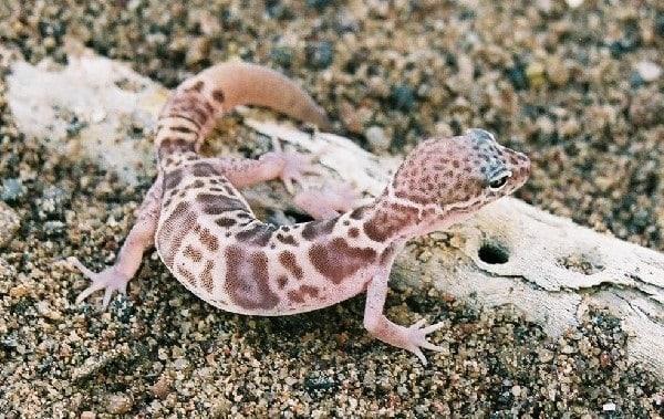 10 Amazing desert Animals14