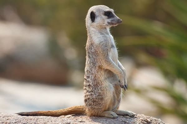 10 Amazing desert Animals3