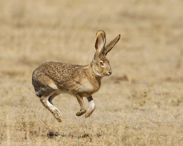 10 Amazing desert Animals5