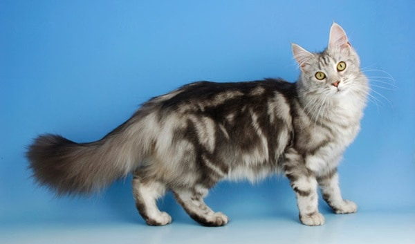 10 Long Haired Dog Breed6
