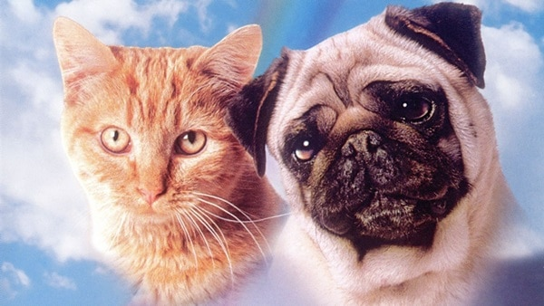 12 Must see movies for the animal lovers11