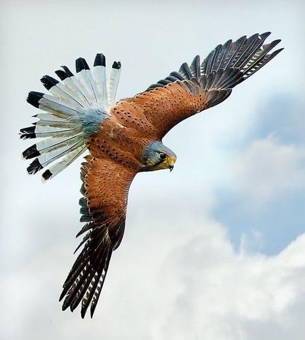 Beautiful Bird Pictures  (1)