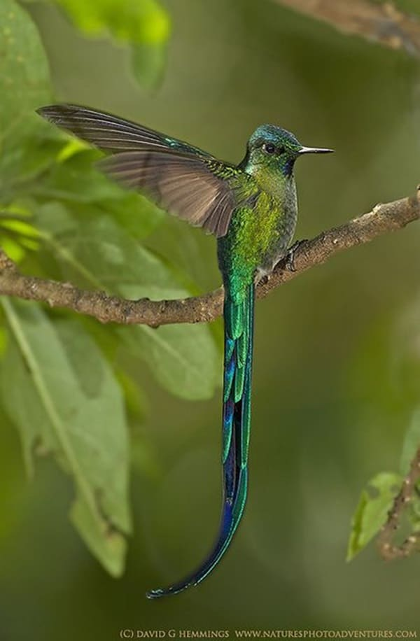 Beautiful Bird Pictures  (12)