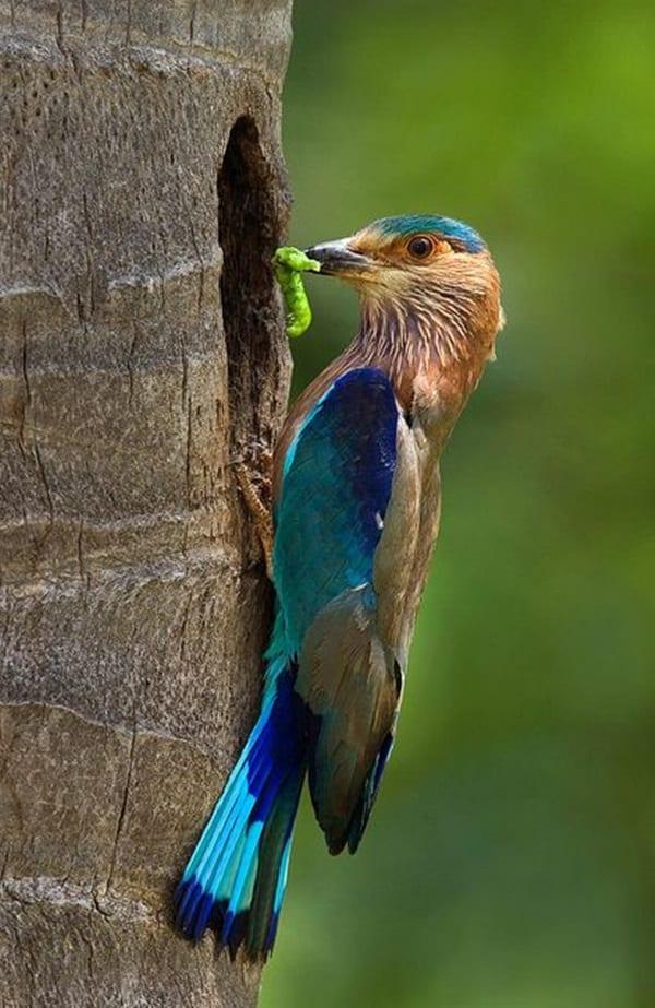 Beautiful Bird Pictures  (14)
