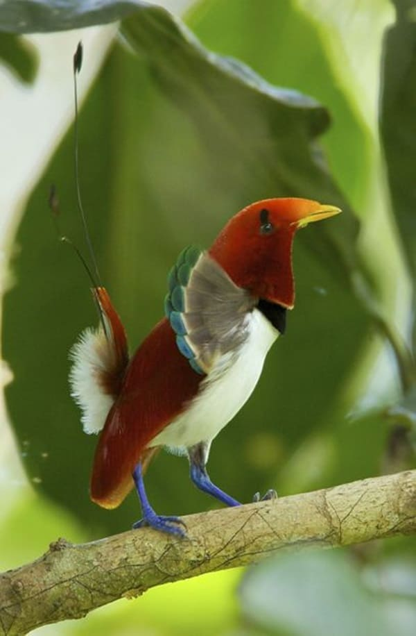 Beautiful Bird Pictures  (16)
