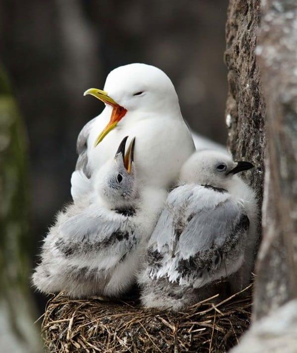 Beautiful Bird Pictures  (17)