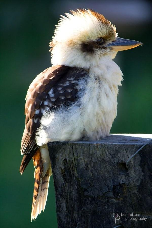 Beautiful Bird Pictures  (18)