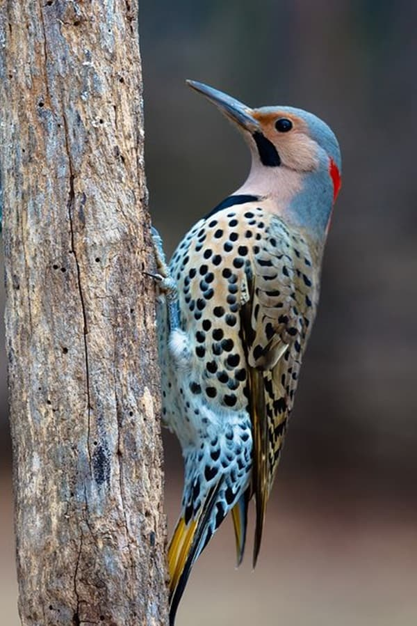 Beautiful Bird Pictures  (19)